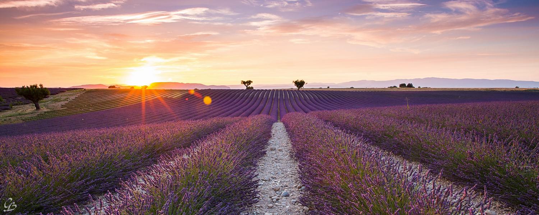 Provence - Oải hương tím biếc miền Nam nước Pháp tháng 7