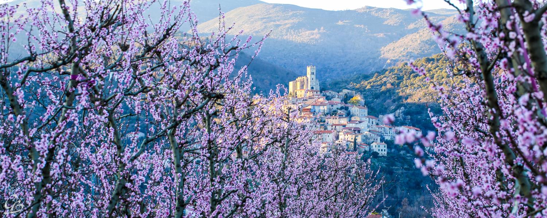Thung lũng sông Têt - Mộng hoa đào tháng 3 ở Pháp
