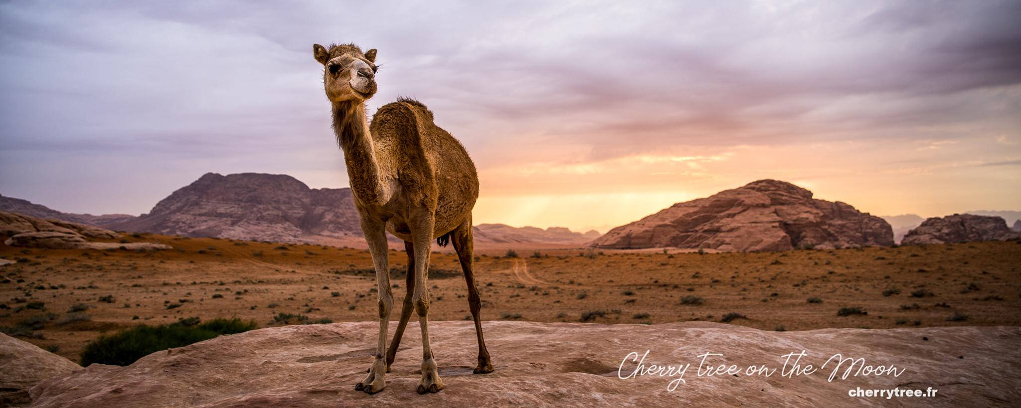 Wadi Rum - Thung lũng Ánh Trăng của Jordan