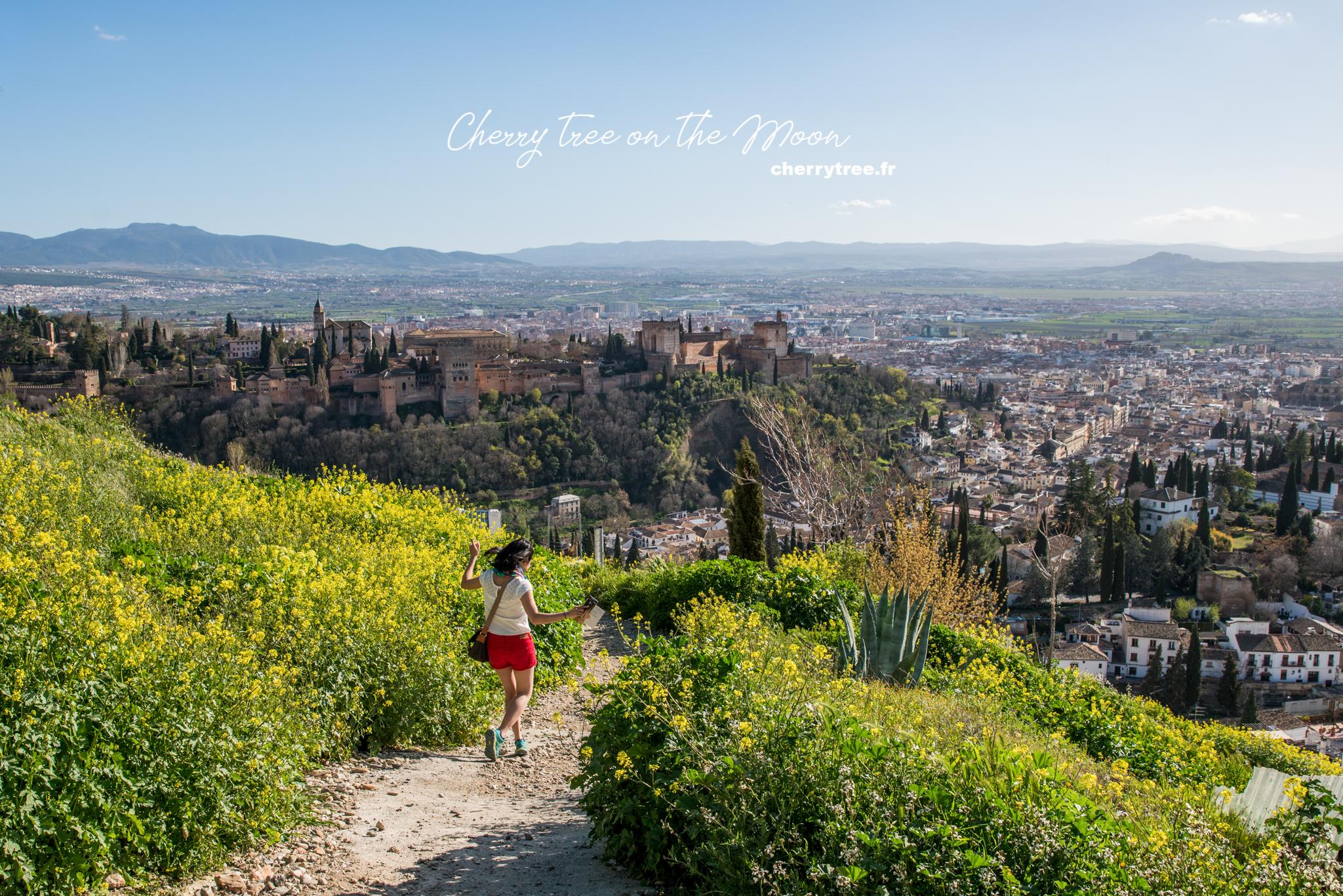 Andalusia mùa này vàng hoa cải, ngay cả những khóm hoa mọc dại trên sườn đồi